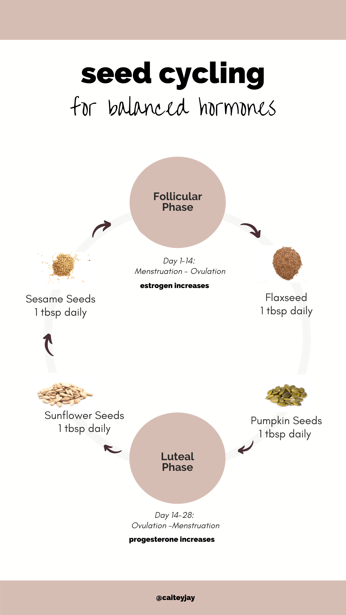 Seed cycling chart. An infographic that shows the seeds you should eat at each point of the menstrual cycle.